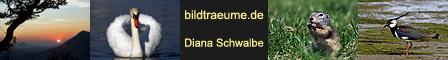 banner_bildtraeume